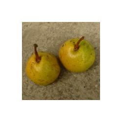 Poirier 'Bergamotte Crassane'