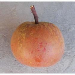 Poirier 'Bergamotte d'Automne'